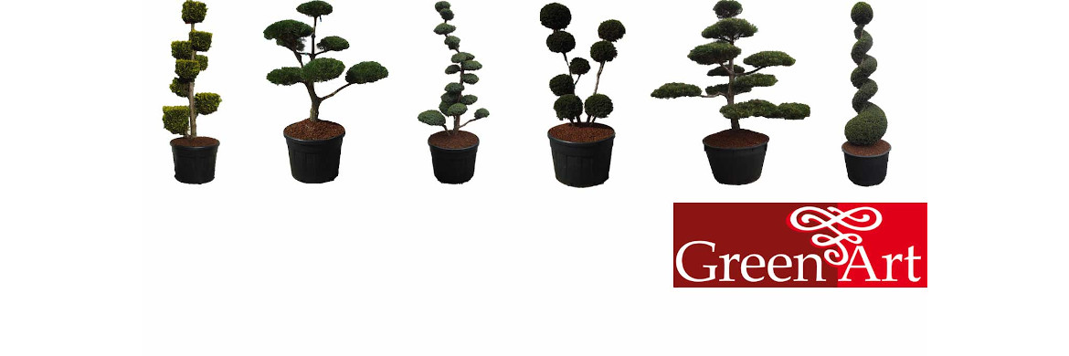 GreenArt | tuinbonsai's